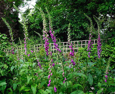 plants, flowers, stumpery,