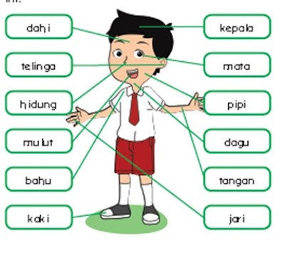 Siswa diberikan tantangan untuk membaca nama-nama anggota tubuh yang ditunjuk guru secara mandiri (guru mengamati sikap percaya diri siswa)