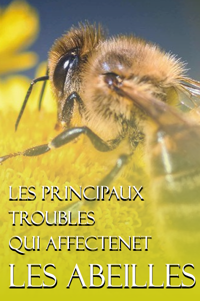 Les principaux troubles qui affectent les abeilles - WWW.VETBOOKSTORE.COM