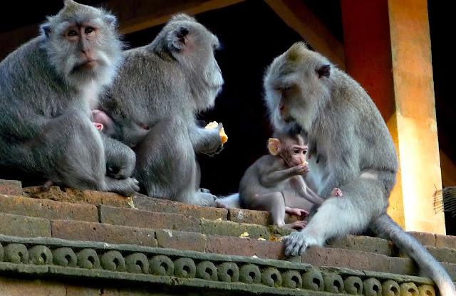Forêt des singes à Ubud, Bali, Indonésie