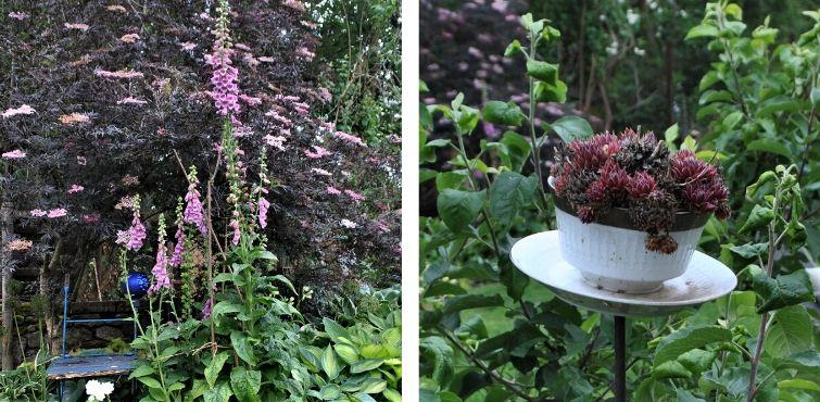 Rotes Laub und rosa Blüten - bepflanztes Geschirr