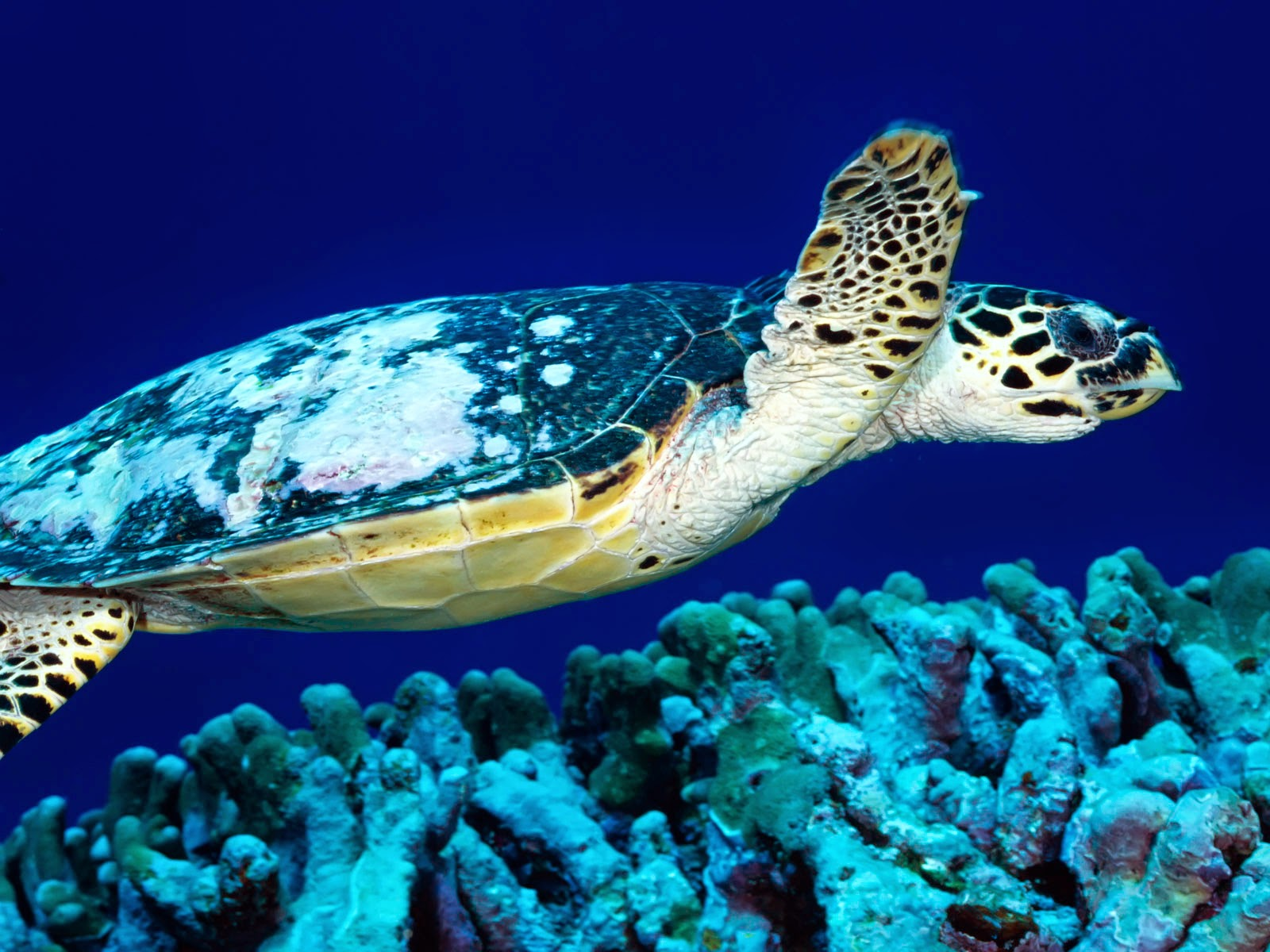 Turtle HD Wallpapers ~ HD WALLPAPERS