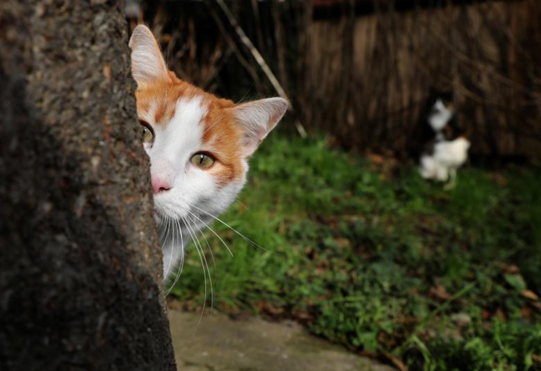 Καβάλα: Πρόστιμο 30.000 ευρώ σε άνδρα που πυροβόλησε γάτα