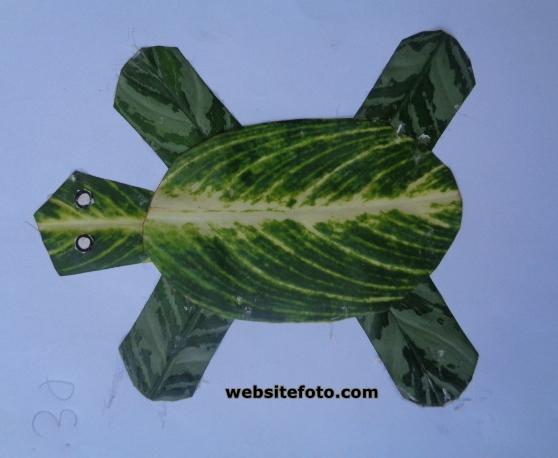 Mozaik kura-kura dengan daun tanaman hias aglonema
