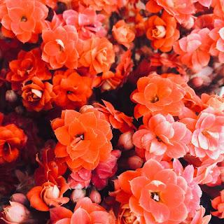 Ah les belles fleurs