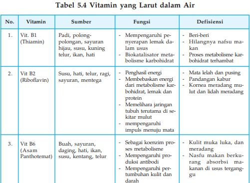 Pengertian Vitamin Fungsi Vitamin Dan Macam Macam Vitamin Zat Makanan