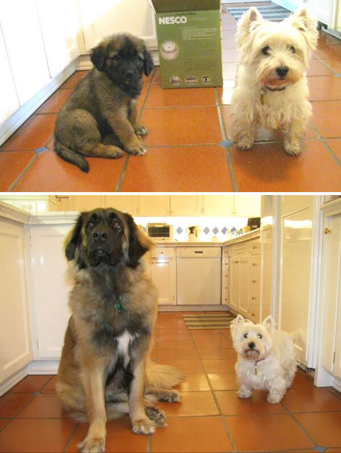 50 Heart-Warming Photos of Animals Growing Up Together - Pups Then And Now. I Forgot To Water The Other One