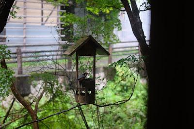 鳥取の古民家の喫茶店とギャラリー 歩とり 小鳥・ヤマガラ