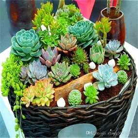 Colecionáveis plantas