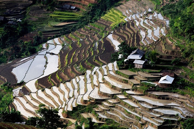 Unique terraces in Ha Giang 2