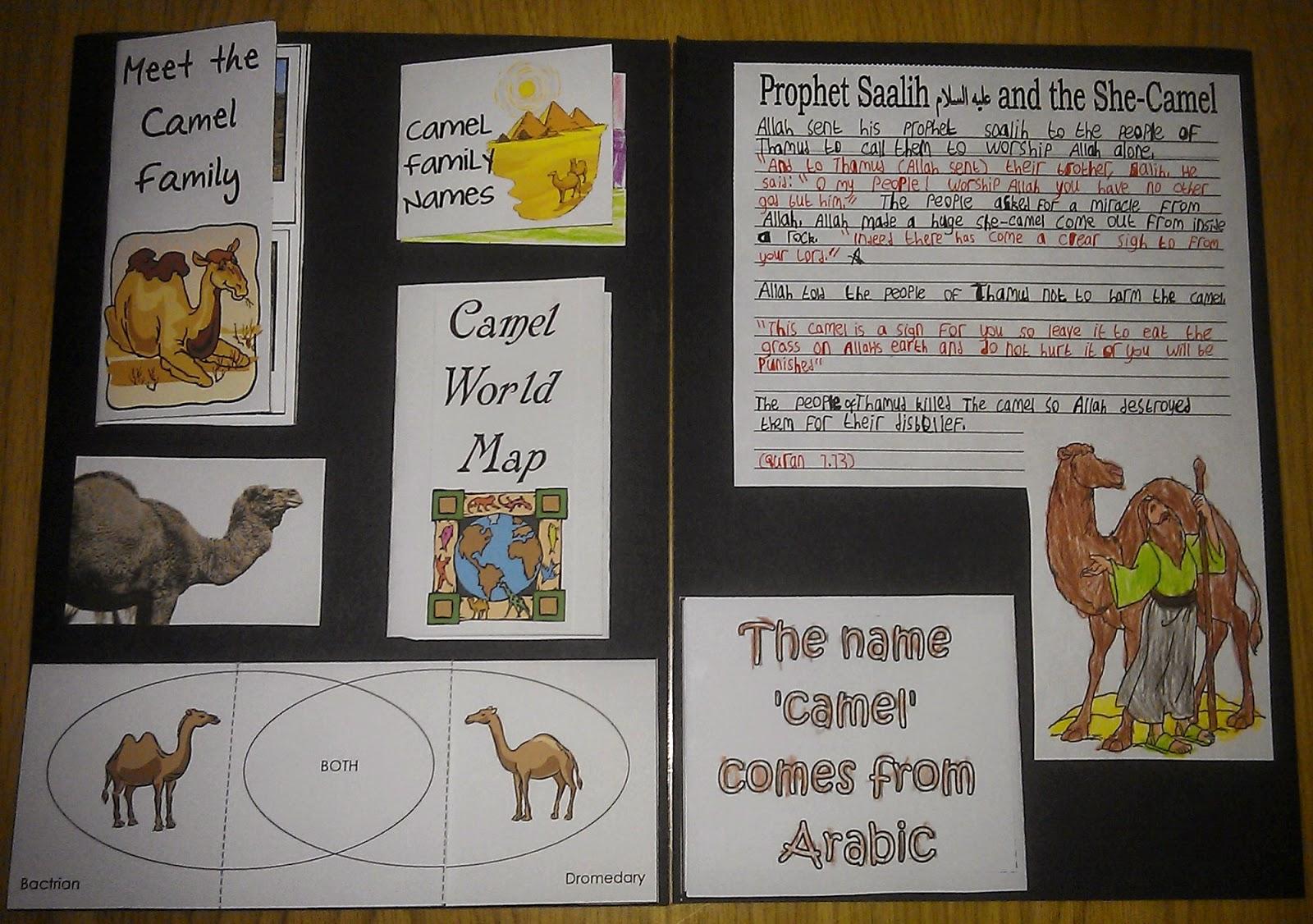 Iman S Home School Camel Lapbook