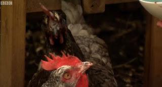 Alys chicken