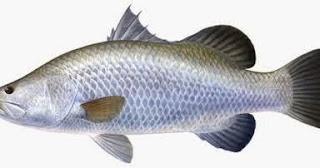 Umpan Jitu Ikan Bandeng Pancing Begog