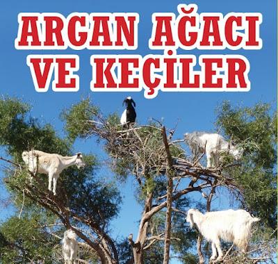 argan yağı, argan, argan ağacı, keçiler, fas, afrika, çöl, teke, keçi