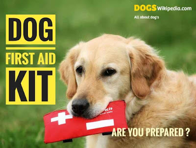 How to make a dog first aid kit, what are the items Include in the dog first aid