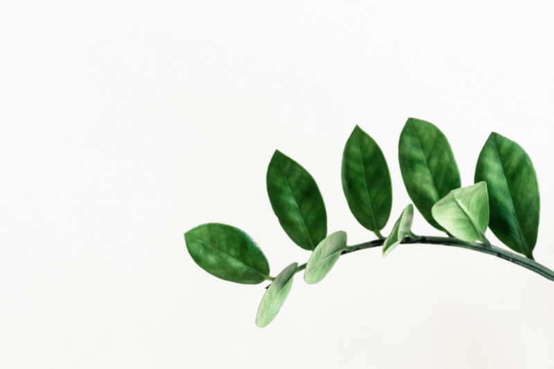 plant branch on white background