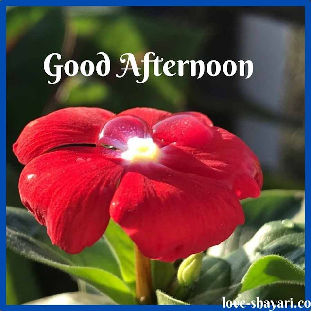 Special Good Afternoon Images