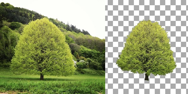 Powerful Techniques To Cut Out Trees In Photoshop