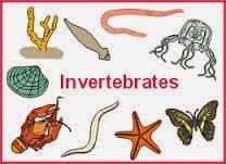 http://www.materi-sma.com/2014/06/penjelasan-klasifikasi-hewan-Invertebrata.html
