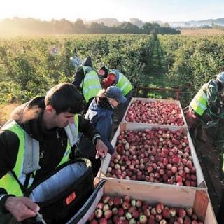 Εργάτες Γης.Τα πάνω-κάτω φέρνει η τροπολογία για την διατήρηση επιδομάτων τους.