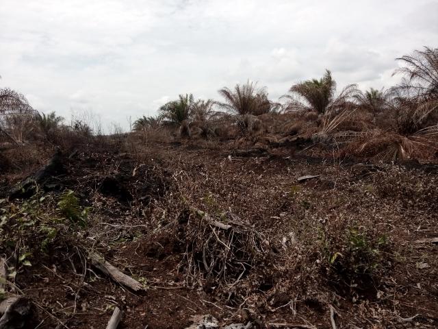 Kebakaran Hutan dan Lahan di Siak Sri Indrapura Mencapai Ribuah Hektar