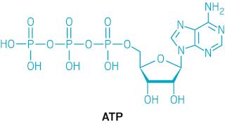 Hva står ATP for?