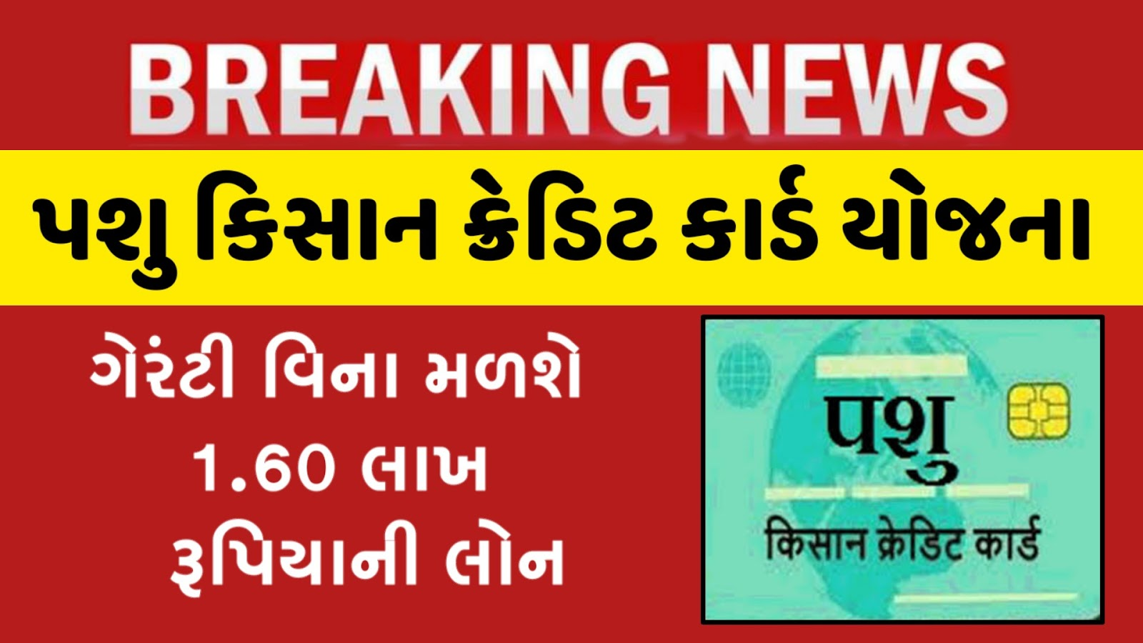 Apply For Pashu Kisan Credit Card Gujarati News