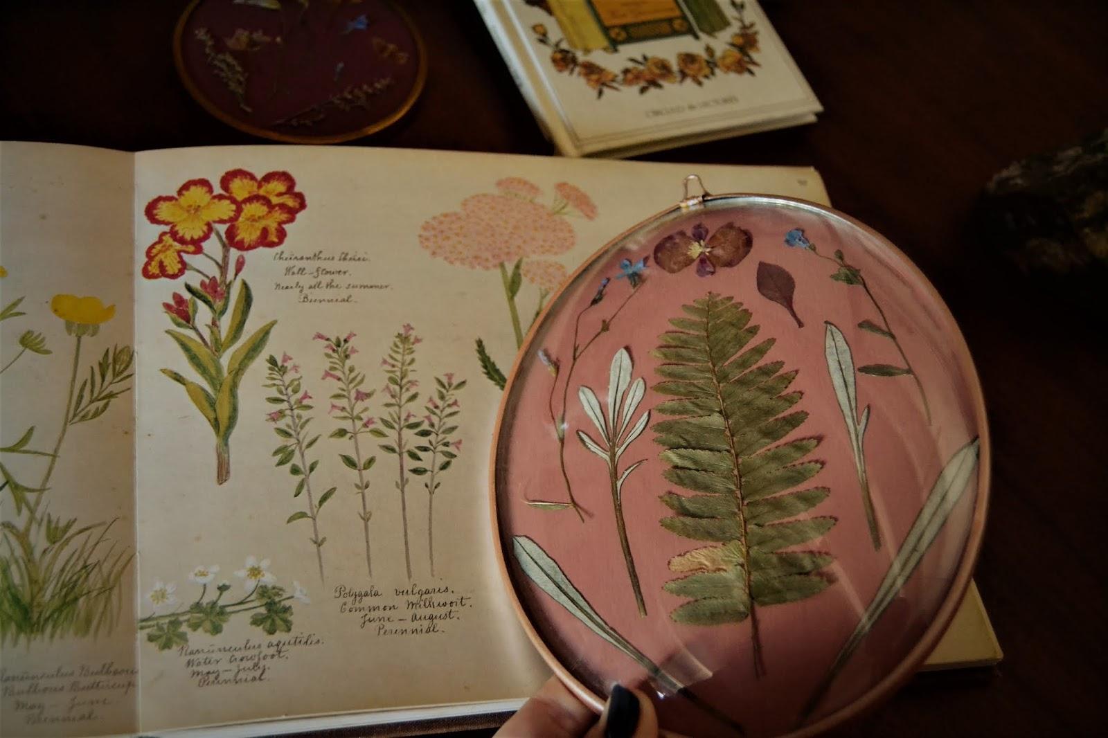 DIY, cómo hacer cuadros con flores prensadas, también te cuento cómo prensar flores y hojas