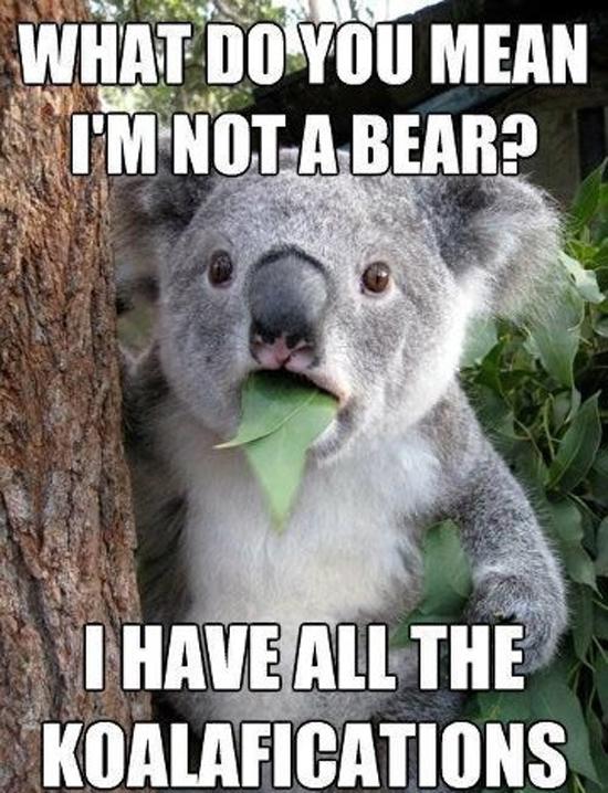 What do you mean I'm not a bear? I have all the koalafications!