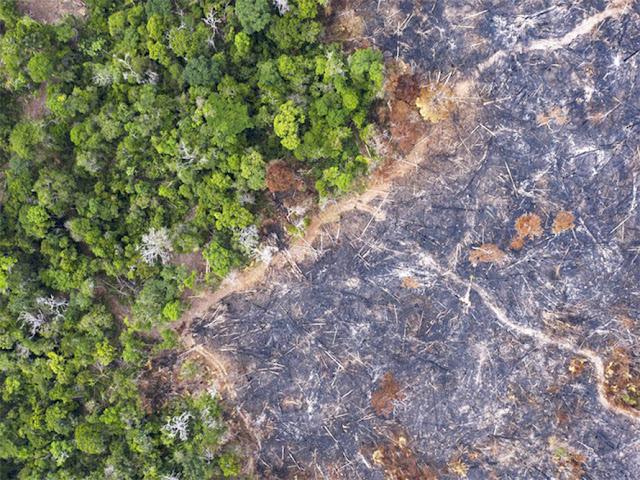 Một góc rừng Amazon bị cháy rụi ở bang Para, Brazil, năm 2019