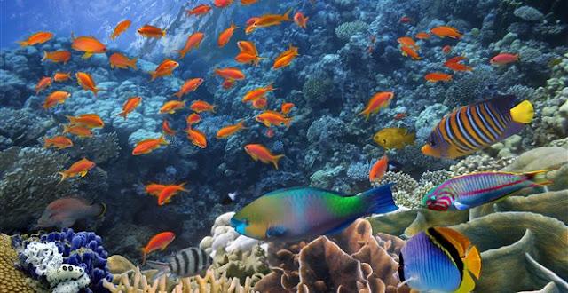 Η Μεσόγειος έχασε το 41% των θαλάσσιων θηλαστικών της σε 50 χρόνια