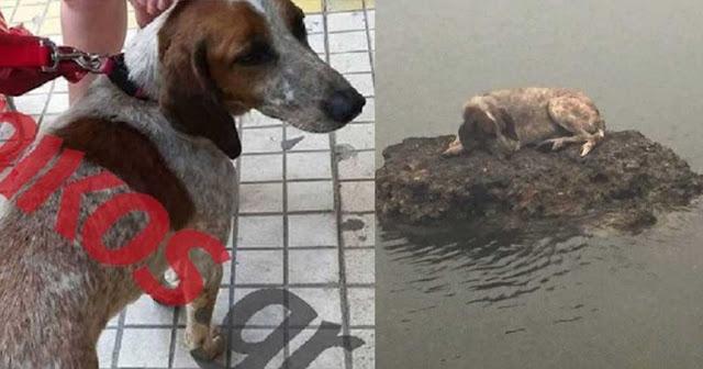 Αυτό είναι το σκυλάκι που βρήκε καταφύγιο σε βράχο για να σωθεί από τη φωτιά