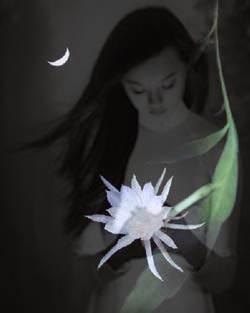 Quỳnh hoa-