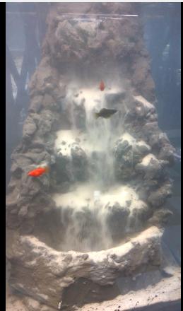 thác cát - suối thác thủy sinh Vinh Aqua làm cho anh Phong Hà Nội