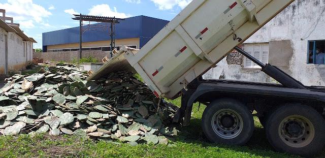 Prefeitura inicia distribuição de raquetes de palmas a pequenos criadores de Caraúbas