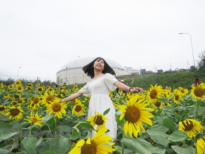STT hoa Hướng Dương