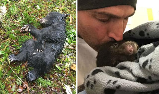 Парень спас медвежонка, рискуя своей жизнью и свободой