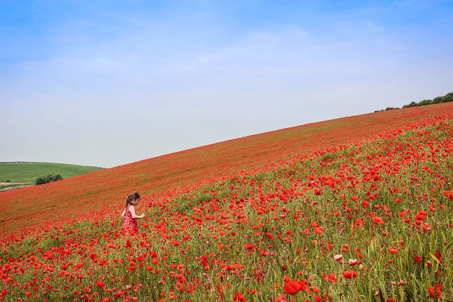 A girl in a red dress walking through a field on a hill covered in red poppies taken by Lauren from Scrapbook blog