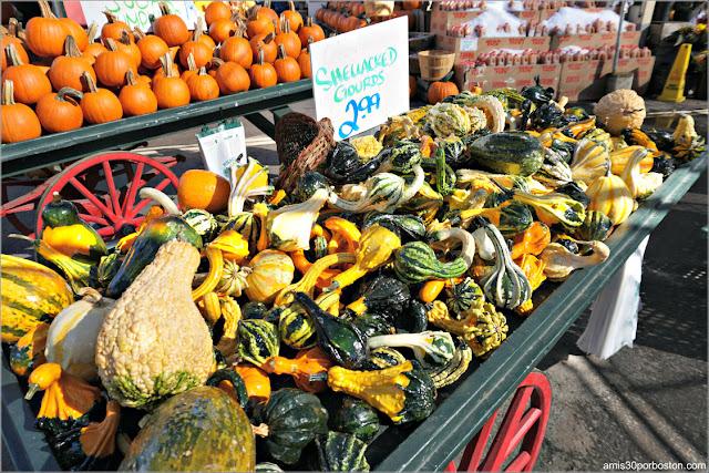 Calabazas Gourds Barnizadas en Wilson Farm, Lexington
