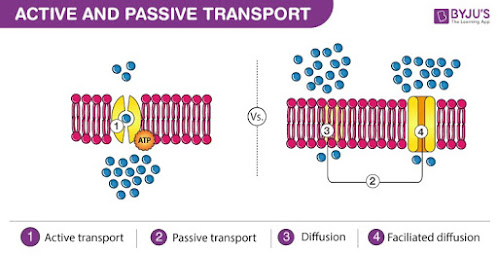 Perbedaan transpor aktif dan pasif