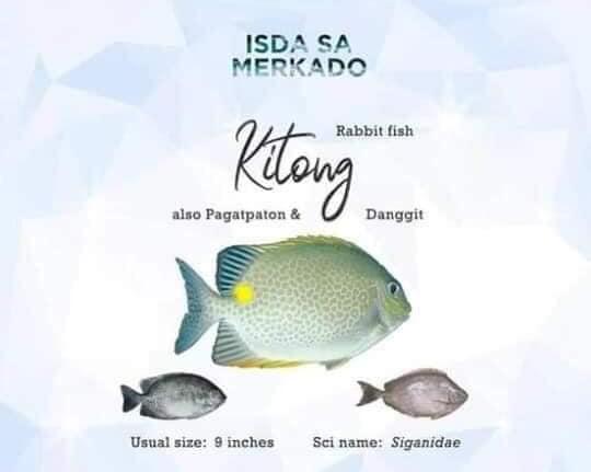 Isda Kitong, Pagatpaton, Danggit, Samaral (Rabbit Fish)