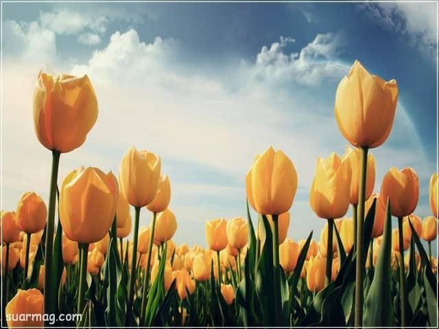 صور خلفيات - خلفيات ورد 9   Wallpapers - Flowers backgrounds 9