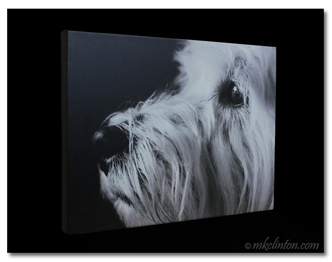 Collage.com canvas print of Westie