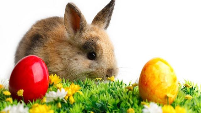 Rabbit Food List In Malayalam