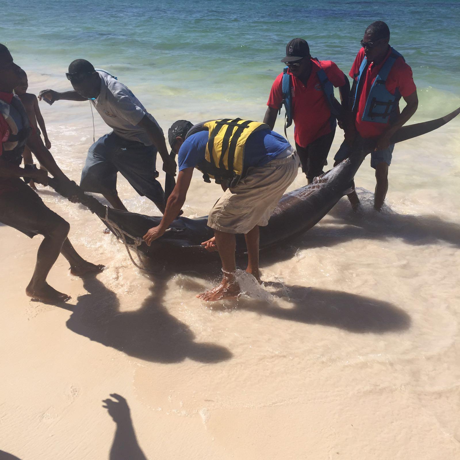 Punta cana fishing for Punta cana fishing