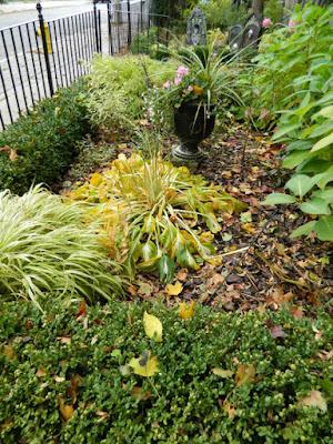 Toronto Cabbagetown front garden makeover before Paul Jung Gardening Services
