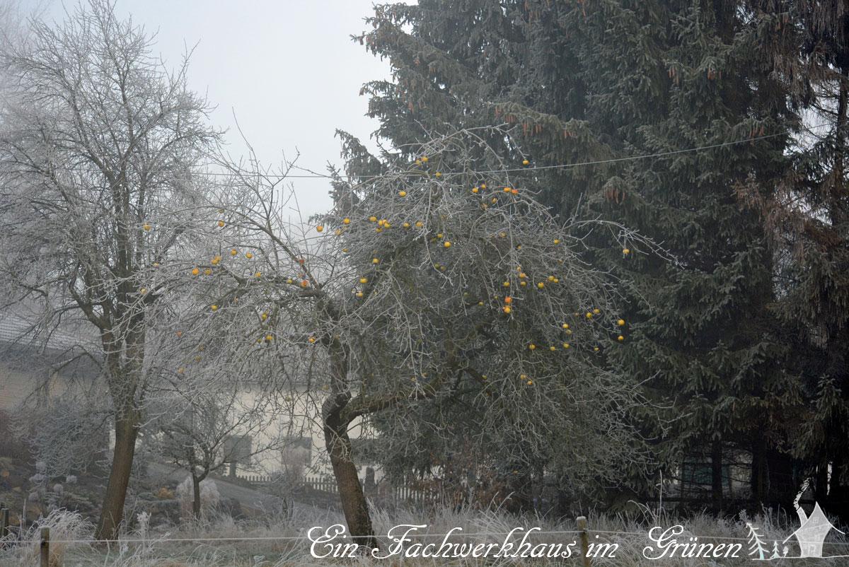 Apfelbaum, Winter