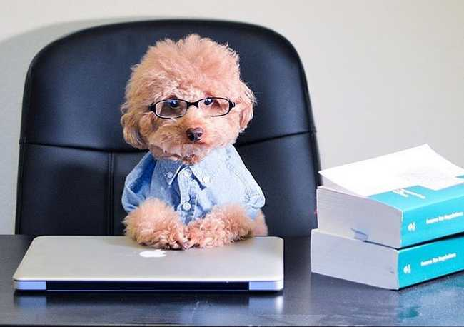 4 Reasons Dogs Are The Best Company a Writer Can Have