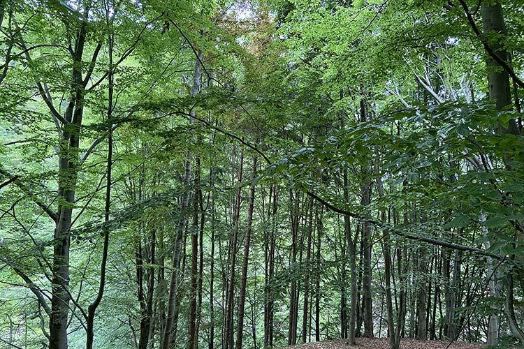 Oasi Zegna-Conca dei Rododendri