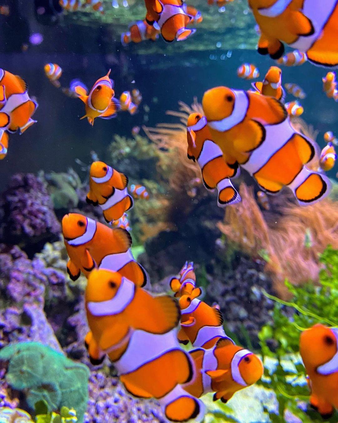 wisata bawah laut di london